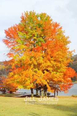 The Brilliant Tree By The Lake