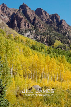 Ascent Of The Aspens