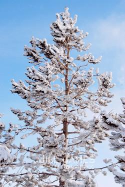 A Breath Of Fresh Snow