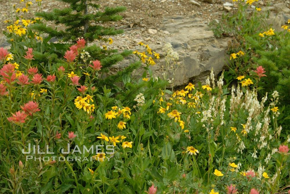 Flowers In The Rocks