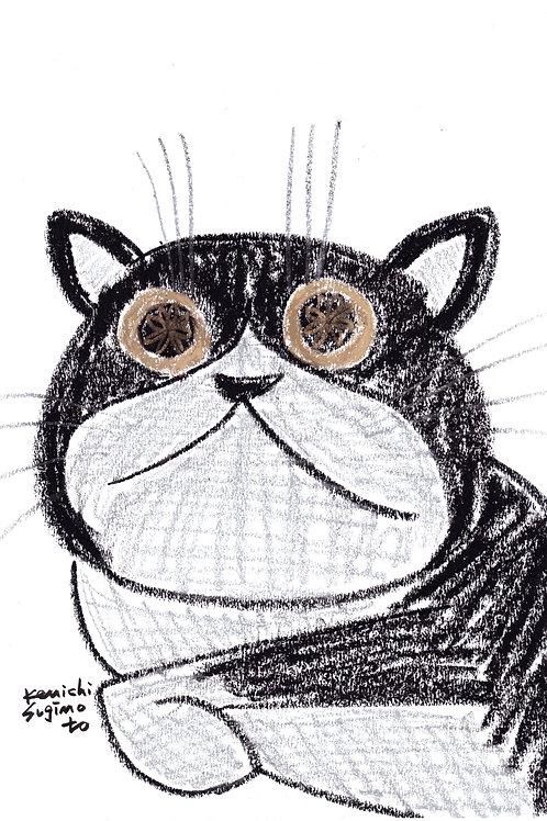 金色の目の猫 / Cat with golden eyes