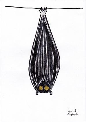 コウモリの目 / Bat eyes