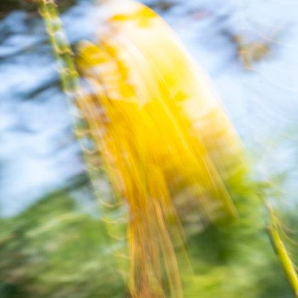 Energy Flow# Yellow