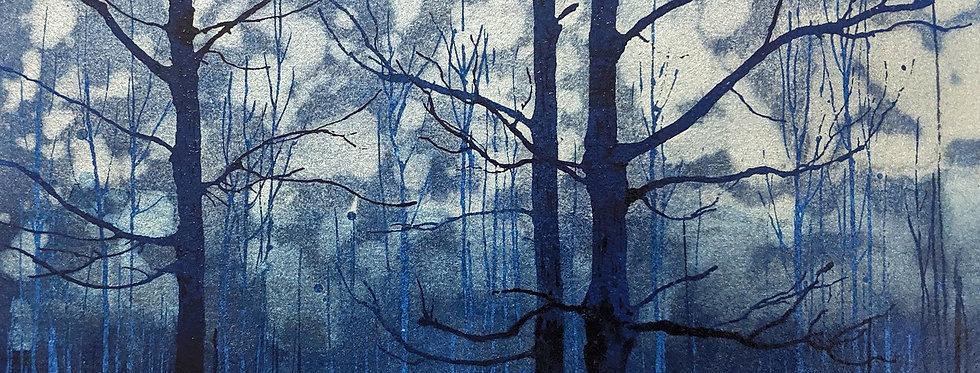 Mist in the Sugarbush