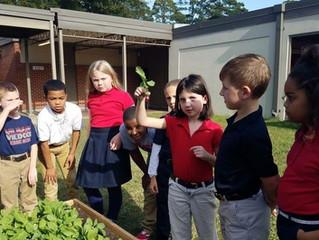 School Gardens are Growing!