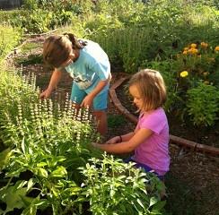 Gardening for Stress
