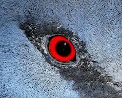 الحسد والعين