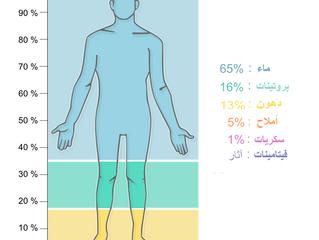 التركيب الكيميائي لجسم الإنسان