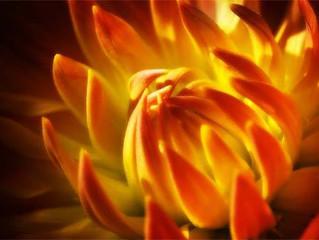 ابداعات الخلق في الزهور