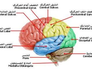 قدرات الدماغ