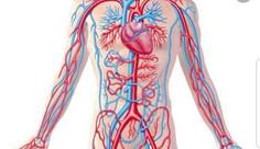 الأوعية الدموية..ليست مجرد أنابيب... تصميم اعجازي حيّ...