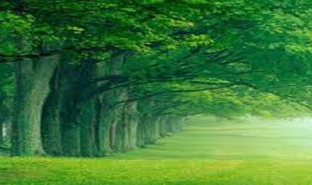 أشجار وأنهار الجنة