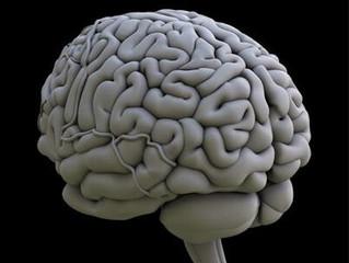 المخ البيني
