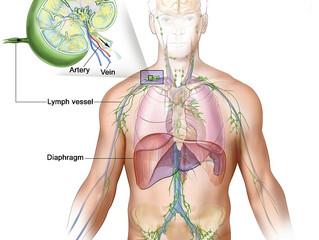 أعضاء الجهاز المناعي في جسم الإنسان