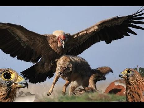 الطيور الجارحة تنتمي لأسرة كبيرة من عالم الطيور