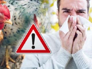 علاج انفلونزا الطيور بالطب البديل...