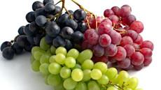 فاكهة العنب