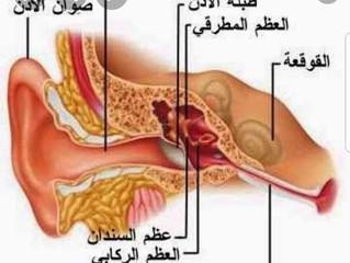 تعرف على أهمية عظام السمع الوسطى...