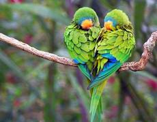 ابداع الخالق للطيور