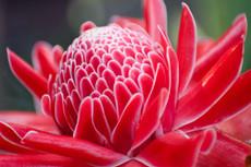 عجائب لغة الزهور