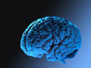 اعضاء الجهاز العصبي في الجسم