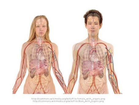 تعريف جسم الإنسان