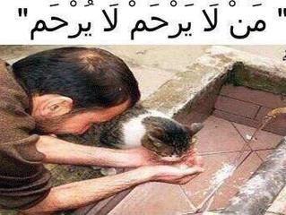 نظرة الاسلام للحيوان
