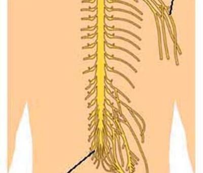 تكوين جسم الانسان السوي وكيف يتحرك !!