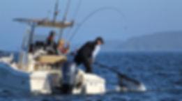 Legacy Lodge netting huge coho salmon