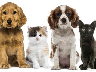 Protege a tu mascota en caso de desastres naturales