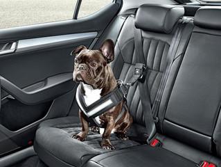Recomendaciones para viajes en el auto