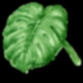 熱帯の葉7
