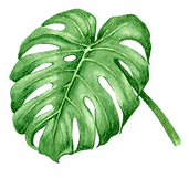 #capfilmfest Tropical Leaves 7