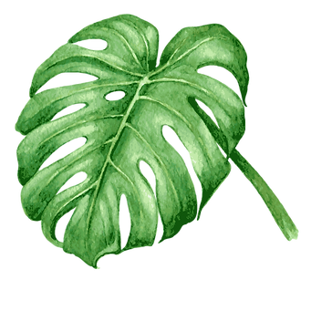 Les feuilles tropicales 7