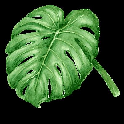 Les feuilles tropicales tacacori
