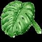 Тропические листья 7