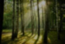 sunrise-forest-plain_edited.jpg