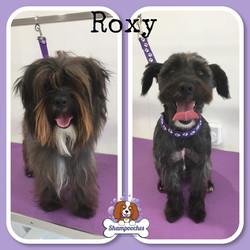 Roxy.jpg