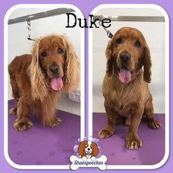 Duke1.jpg