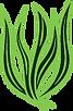 Green Spirulina.png