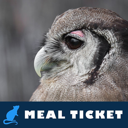 Meal Ticket - Gracie
