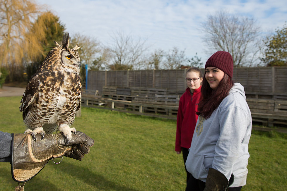owl experience days at baytree owl and wildlife centre