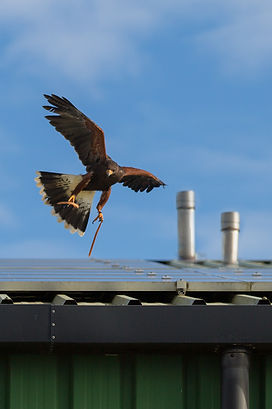 Bird of prey surveys guttering