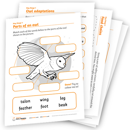 Learn With BOWC Worksheet Pack - 5 Worksheets (KS1/KS2)