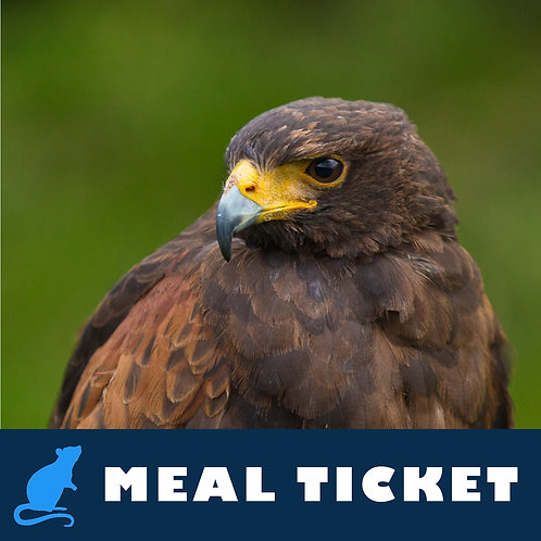 Meal Ticket - Rage