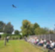 Flying Demonstraton at Baytree Owl and Wildlife Centre