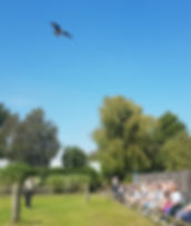 Flying Demonstration at Baytree Owl and Wildlife Centre