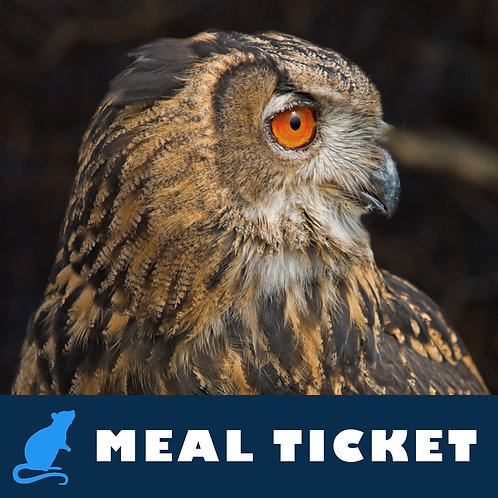 Meal Ticket - Evie