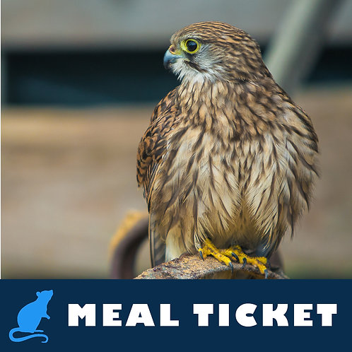 Meal Ticket - Bella
