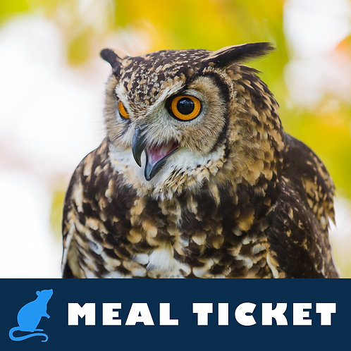 Meal Ticket - Tafari